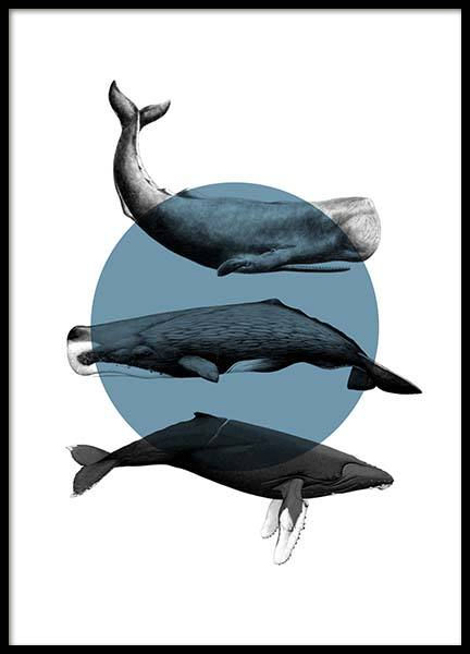 Whales Graphic Poster in the group Prints / Animals at Desenio AB (10033)