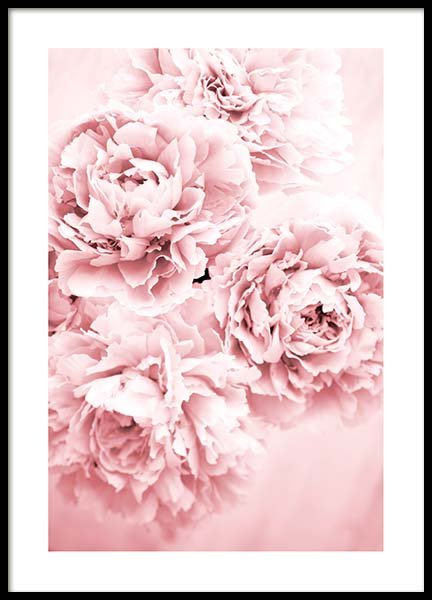Pink Dream Poster in the group Prints / Floral at Desenio AB (10054)
