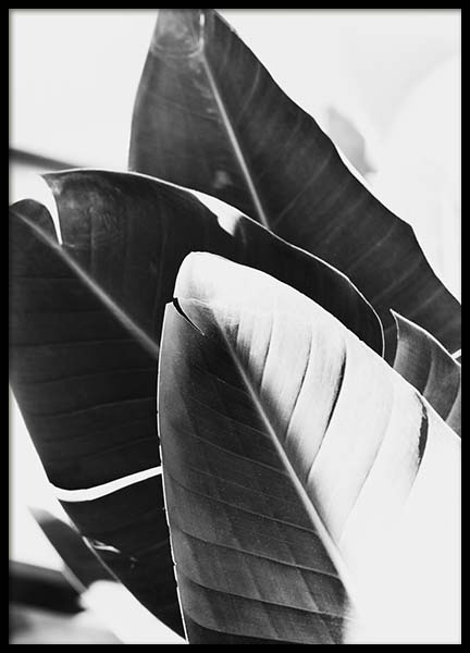 B&W Banana Leaves No1 Poster in the group Prints / Floral at Desenio AB (10063)