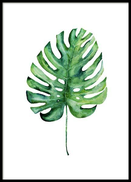 Monstera Aquarell One Poster in the group Prints / Botanical at Desenio AB (10069)