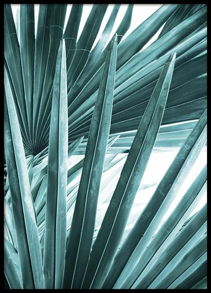 Bismarck Palm No2 Poster in the group Prints / Photographs at Desenio AB (10129)