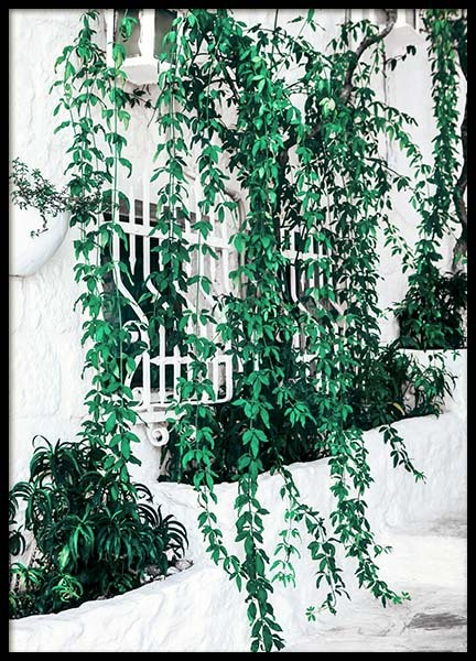 Ivy Window Poster in the group Prints / Floral at Desenio AB (10140)