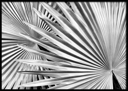 Silver Palm Poster in the group Prints / Black & white at Desenio AB (10144)