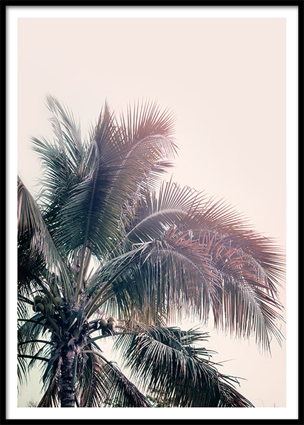 A Palm Tree Dream Poster in the group Prints / Photographs at Desenio AB (10169)