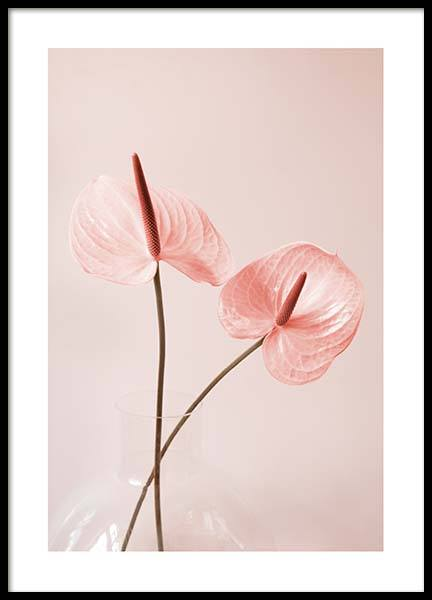 Pink Anthurium No2 Poster in the group Prints / Floral at Desenio AB (10210)
