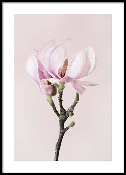 Magnolia Dream Poster in the group Prints / Floral at Desenio AB (10211)