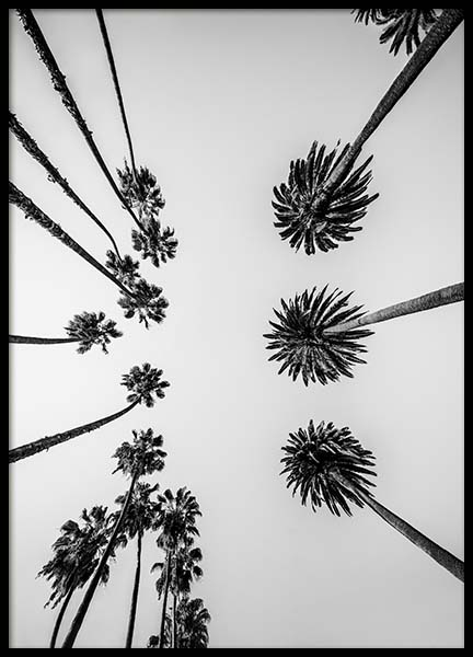 Palm Trees Above Poster in the group Prints / Nature at Desenio AB (10234)