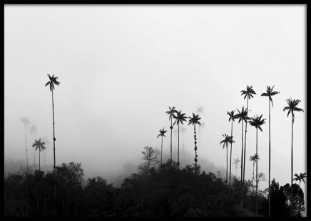Foggy Palms Poster in the group Prints / Nature at Desenio AB (10236)