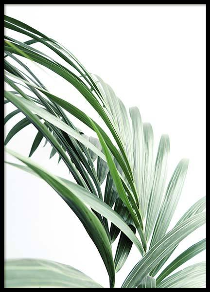 Palm Tree Leaves Close Up Poster in the group Prints / Photographs at Desenio AB (10244)
