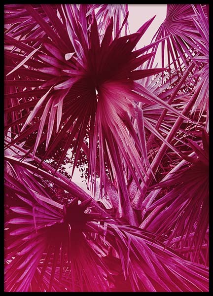 Tropical Coconut Tree Poster in the group Prints / Floral at Desenio AB (10255)