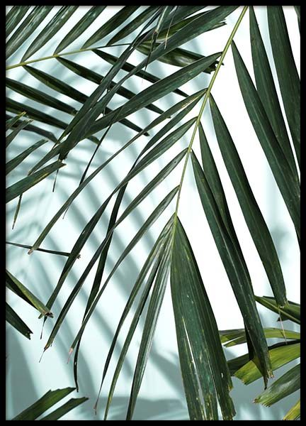 Palm Leaves Shadow No1 Poster in the group Prints / Floral at Desenio AB (10284)