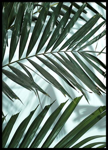 Palm Leaves Shadow No2 Poster in the group Prints / Photographs at Desenio AB (10285)