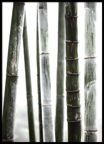 Bamboo No1 Poster in the group Prints / Floral at Desenio AB (10287)