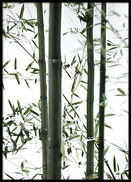Bamboo No2 Poster in the group Prints / Floral at Desenio AB (10288)