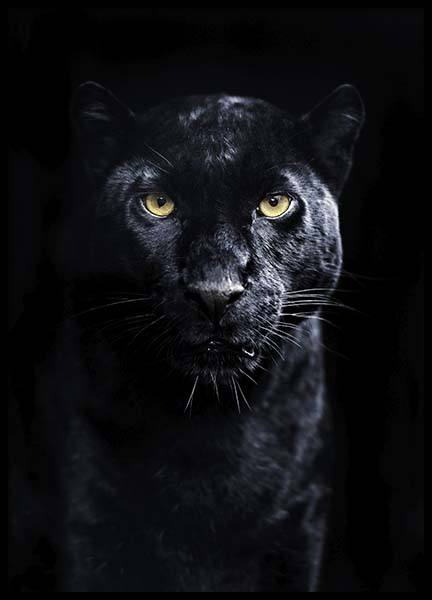Panther Poster in the group Prints / Sizes / 50x70cm | 20x28 at Desenio AB (10403)