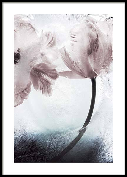 Tulipe And Ice No1  Poster in the group Prints / Photographs at Desenio AB (10409)