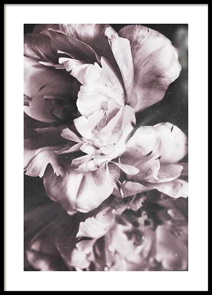 Tulip Dream  Poster in the group Prints / Sizes / 50x70cm | 20x28 at Desenio AB (10417)