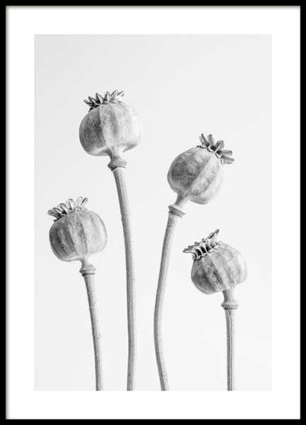 Poppy Buds Poster in the group Prints / Floral at Desenio AB (10423)