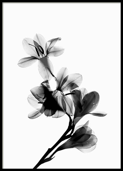 Scanned Flower Poster in the group Prints / Black & white at Desenio AB (10425)