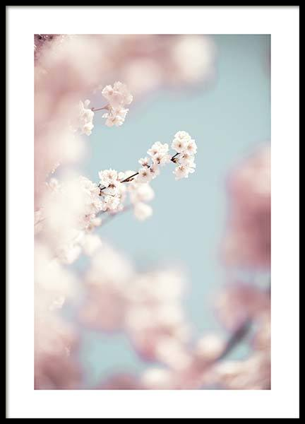 Cherry Blossom No1 Poster in the group Prints / Photographs at Desenio AB (10426)