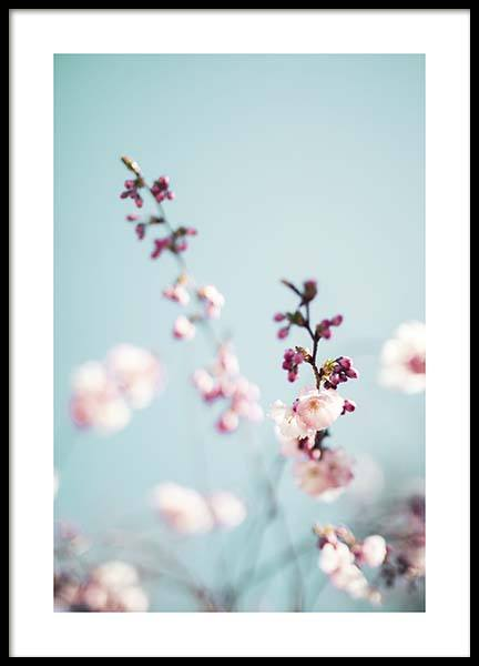 Cherry Blossom No2 Poster in the group Prints / Floral at Desenio AB (10427)