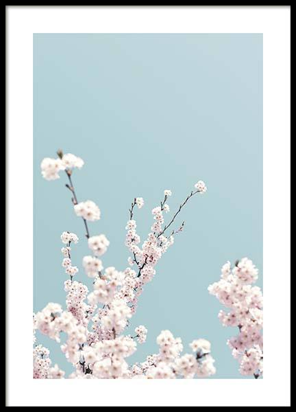 Cherry Blossom No3 Poster in the group Prints / Photographs at Desenio AB (10428)