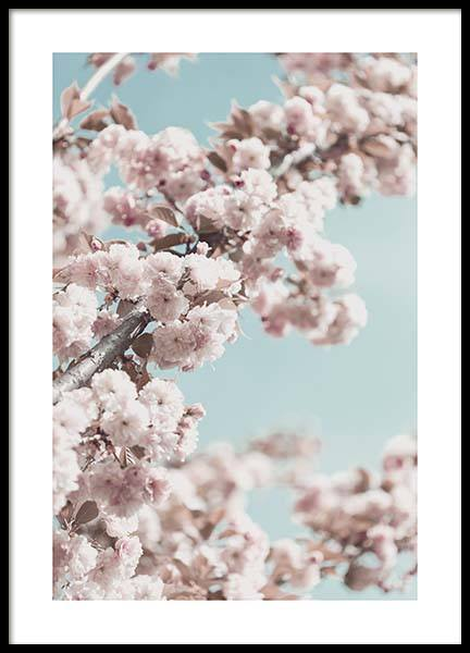 Cherry Blossom No4 Poster in the group Prints / Floral at Desenio AB (10429)