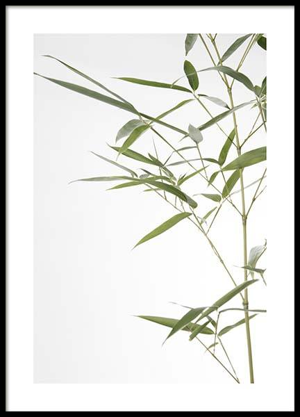 Bamboo Leaves No1 Poster in the group Prints / Floral at Desenio AB (10434)
