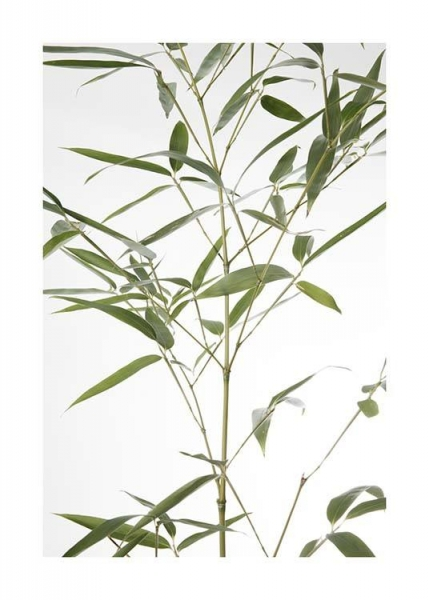 Bamboo Leaves No2 Poster in the group Prints / Floral at Desenio AB (10435)