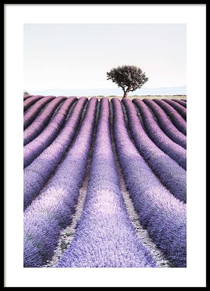 Provence Poster in the group Prints / Sizes / 50x70cm | 20x28 at Desenio AB (10462)