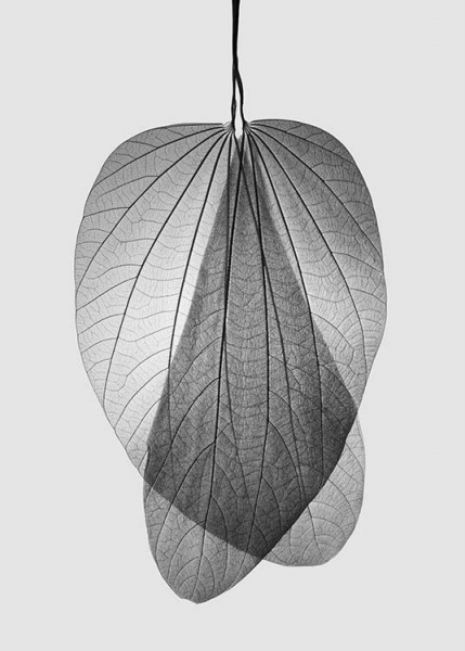 Leaf Skeleton no2 Poster in the group Prints / Floral at Desenio AB (10521)