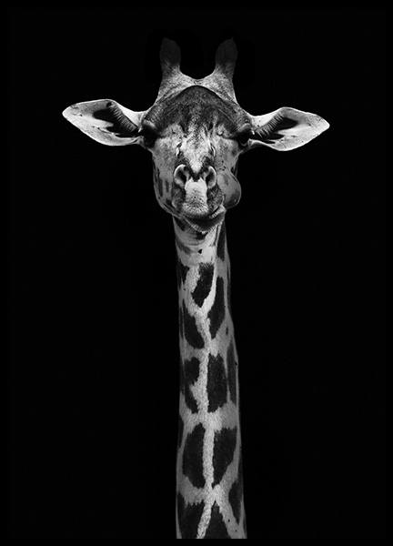 Giraffe on Black Poster in the group Prints / Black & white at Desenio AB (10619)
