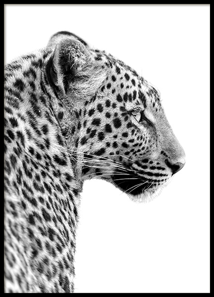 Leopard Profile Poster in the group Prints / Animals at Desenio AB (10656)