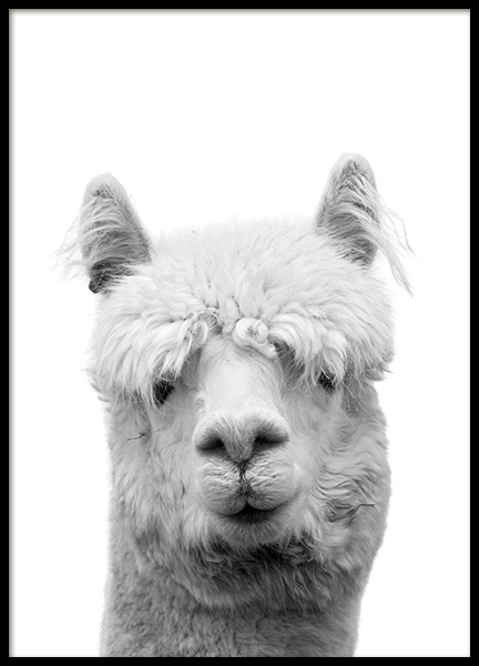 Lama B&W Poster in the group Prints / Black & white at Desenio AB (10657)