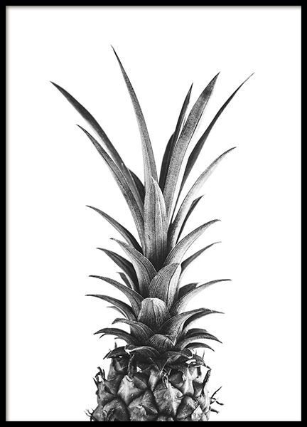 Pineapple B&W Poster in the group Prints / Black & white at Desenio AB (10658)