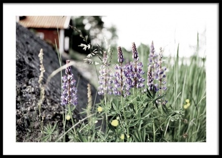 Flowering Lupines Poster in the group Prints / Nature at Desenio AB (10707)