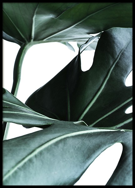 Big Monstera No.1 Poster in the group Prints / Floral at Desenio AB (10736)
