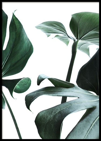 Big Monstera No.3 Poster in the group Prints / Floral at Desenio AB (10738)