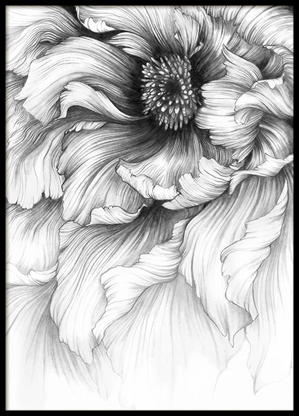 Graphite Flower Poster in the group Prints / Illustrations at Desenio AB (10745)
