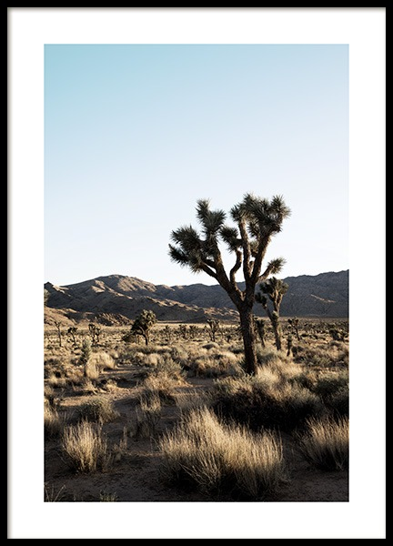 Joshua Tree National Park Poster in the group Prints / Nature prints / Deserts at Desenio AB (10798)