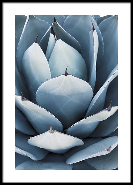 Blue Agave No2 Poster in the group Prints / Floral at Desenio AB (10830)