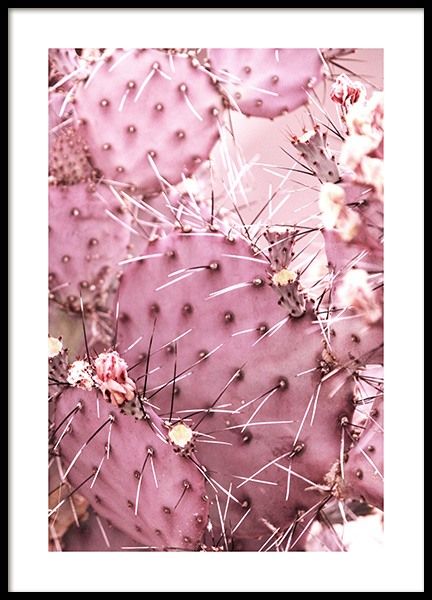 Pink Cactus Poster in the group Prints / Floral at Desenio AB (10850)