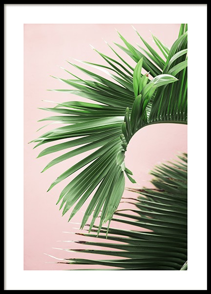 Pink and Green Palm No2 Poster in the group Prints / Floral at Desenio AB (10856)