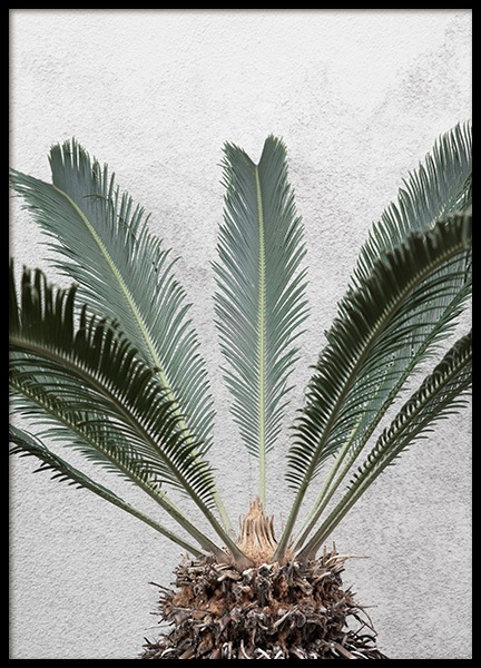 Pineapple Palm Poster in the group Prints / Photographs at Desenio AB (10858)