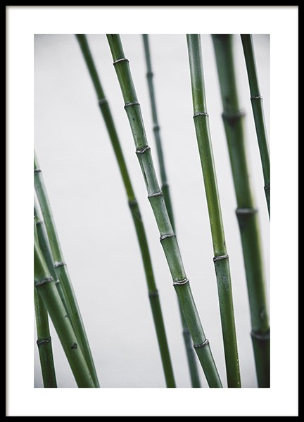 Bamboo Poster in the group Prints / Floral at Desenio AB (10859)