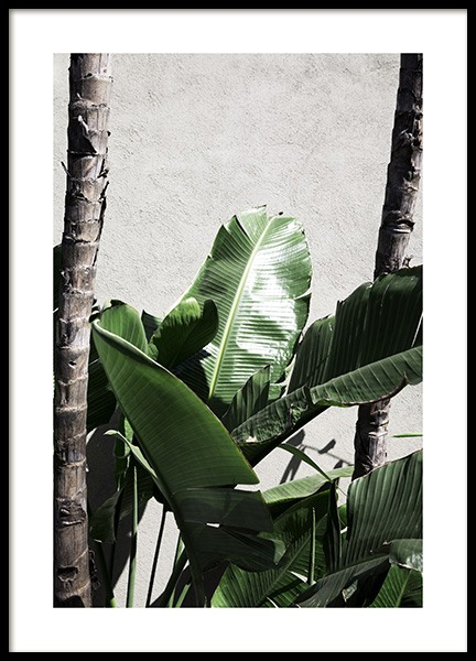 Strelitzia Palm Poster in the group Prints / Floral at Desenio AB (10860)