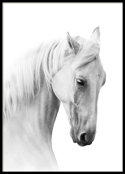 Horse Profile Poster in the group Prints / Animals at Desenio AB (10876)
