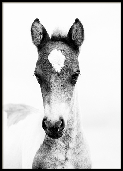 Horse Foal Poster in the group Prints / Black & white at Desenio AB (10877)