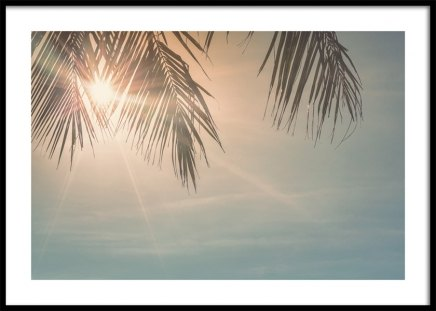 Sunset Palm Leaves Poster in the group Prints / Nature at Desenio AB (10882)