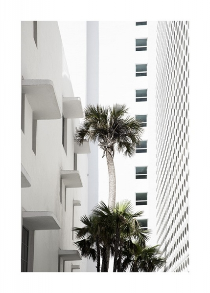 White Palm Facade Poster in the group Prints / Photographs at Desenio AB (10954)